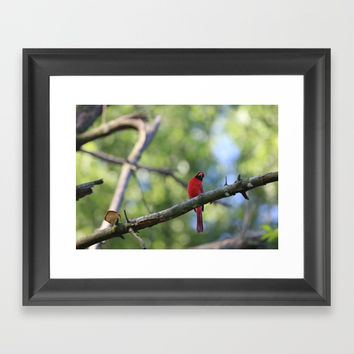 Cardinal IV Framed Art Print by Theresa Campbell D'August Art