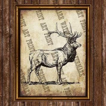 Deer poster Animal illustration Wildlife art print Antique paper grunge style