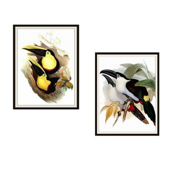 "Set of 2 Vintage Botanical Art Print Poster Reproductions ""Tucans"" #2 8 x 10"" or 11 x 14"", Unframed, Bird Prints, Vintage Tucan Prints"