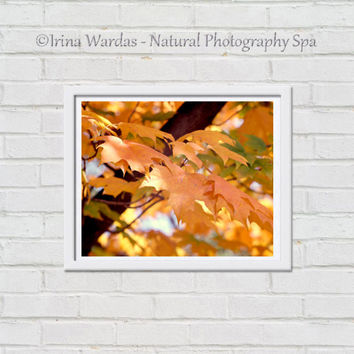 Large Autumn photography, tree branch yellow leaf amber artwork fall decor, orange peach living room gallery wall print 16x20, aqua green
