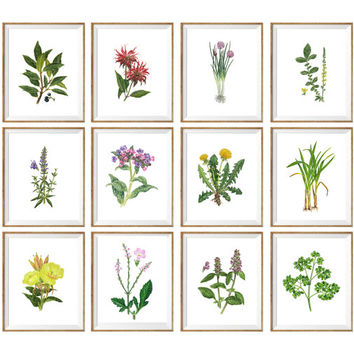 Set of 12 Vintage illustration Flowers Art Print, wild flower prints, flower chart, floral art set, botanical prints set, floral prints *12*