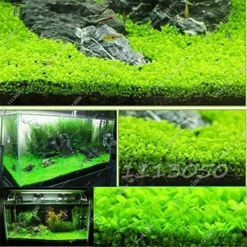 Hot 500 Pcs/bag Featured Aquarium Plant Fish Tank Background Aquatic Plants Seeds Indoor Ornamentals Lanscape for Home Garden
