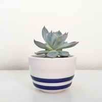 Striped Mini Ceramic Pot Succulent Plant, Succulent Planter, Mini Succulent, Modern Pot