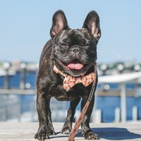 The Minted Bow Tie + Collar - CACTUS