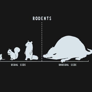 Rodents by Size