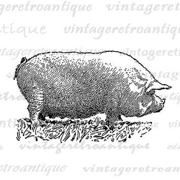 Antique Pig Digital Graphic Farm Animal Art Digital Pig Image Illustration Download Printable Vintage Clip Art Jpg Png Eps HQ 300dpi No.3255