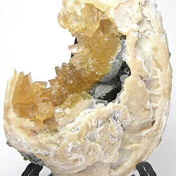 Honey Yellow Calcite Crystals in Prehistoric Clam Shell Natural Mineral Fossil Specimen from Florida