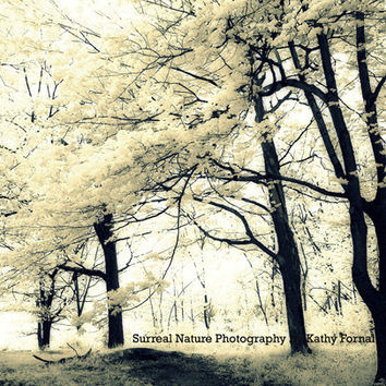 "Nature Photography - Dreamy Surreal Nature Trees, Spring Yellow Trees Wall Art, Fantasy Nature Landscape, Fine Art Photograph 8"" x 12"""