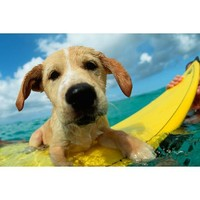 Surf Dog Wall Mural