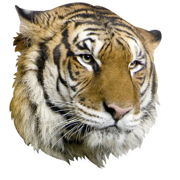 Tiger Mount Wall Decal