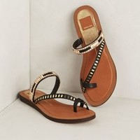 Franzen Sandals by DV by Dolce Vita