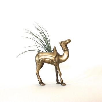Vintage Brass Camel Planter with Air Plant