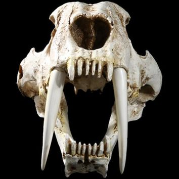 Skull Skulls Halloween Fall 1:1 Saber-Toothed Tiger Resin  Replica Head Model Home Bar Decor Halloween Decor Calavera