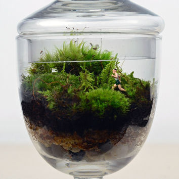 Moss Terrarium // Little People // Jogger // Apothecary Jar// Glass Planter // Living Home Decor // Gift Ideas