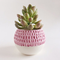 Carved Succulent Planter - Pink Ceramics - Ceramics and Pottery
