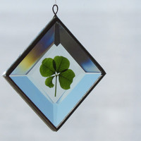 Genuine Four Leaf Clover as a Beveled Glass Suncatcher Ornament
