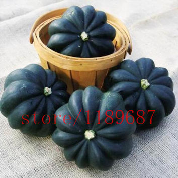 20 Heirloom Acorn Squash Seed -black skin squash Heirloom Table King Squash Non-gmo vegetable seeds for home garden