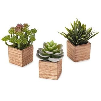 Hallmark Assorted Succulents in Wood Containers