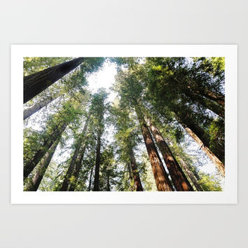 Redwoods Art Print by Sylvia Cook Photography