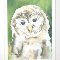 Watercolor Barred Owl Note Card Set of 6 - Woodland Animal