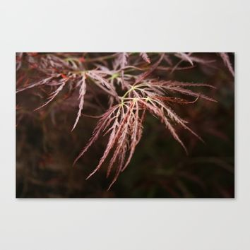 Maple lace leaf Canvas Print by Pepperberry and Sage