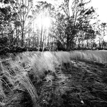 RUSTED SUNSET - Black and White - Australia - Outback - Christmas Gift - Gift Ideas - Landscape - Wall Art - Fine Art - Tall Grass - Grass