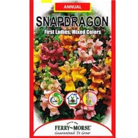 Ferry-Morse, 150 mg. Snapdragon First Ladies, Mixed Colors Seed, 1143 at The Home Depot - Mobile