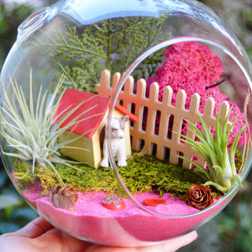 Dog Lover Terrarium ~ Glass Terrarium Kit with 2 Tillandsia Air Plants - Dog -  Doghouse ~ Home Decor - Lichen  Moss- Gift idea