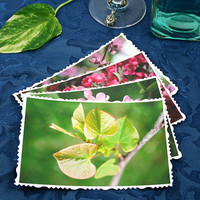 40% off - Fine Art Photography postcards - Spring Birth, set of 4 greeting cards with envelopes