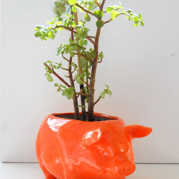 Ceramic Large Pig Planter Vintage Design in Orange