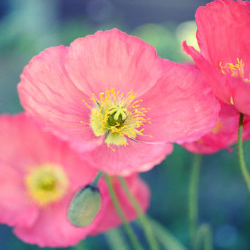 "Summer Flower photography - Poppy flowers dark jade green coral pink floral summer print botanical photograph ""Coral Poppies"""