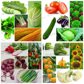 4500 Pcs Vegetable Fruit Survival Pack. Heirloom Fresh Seeds 20 Varieties Pack Easy to Grow Free Shipping!