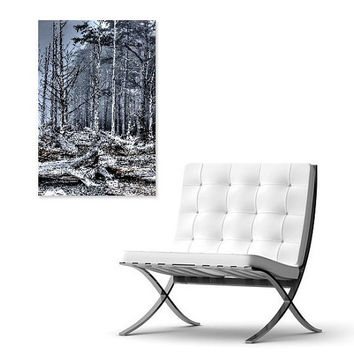 Wall Art: Trees and Driftwood Logs on Pacific Northwest Coastal Beach Forest / Ready to Hang & Display Photo Print Mounted on Board (RMU001)