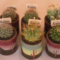 "Live Baby Cactus - 1 Inch Ceramic Pot(exactly As Pictured) - Small Cacti - Cutest Little Mini Cactus - You Will Receive 1 Mini Cactus in a 1"" Ceramic Pot(exactly As Pictured)"