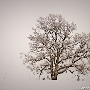 Winter Photography, Oak Tree, Golden, Matted Print, Sepia Tones, Frost, Snow, Serene, Christmas in July