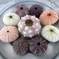 Sea Urchin Collection by PinkPelicanDesigns on Etsy