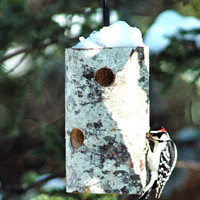 More Birdhouses & Feeders - OREGON SUET FEEDER