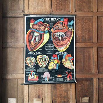 1916 Medical Pull Down Chart, LARGE Anatomical Heart Chart, Medical Poster, Antique Medical Art, Medical Decor, Oddities