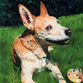 American Dingo Dog Portrait 529