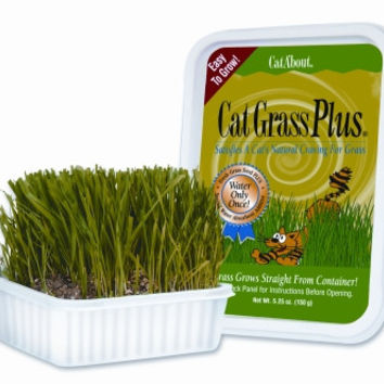 Cat Grass Plus Tub - 150 Grams