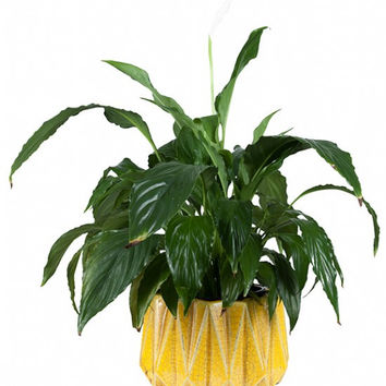 General Eclectic Plant Pot - yellow