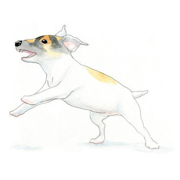 Leaping Jack Russell Art Print - Cute Minimalist Jack Russell Ink & Watercolor Painting - Dog Art Print by InkPug!