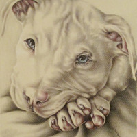 White Pit Bull with Blue Eyes pet portrait, original pencil drawing dog animal pet lover drawing handmade wall art gift, white, pink, smile