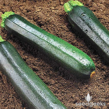 Dark Green Zucchini Summer Squash Heirloom Seeds - Non-GMO, Open Pollinated, Untreated