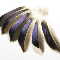 Feathers Mallard feathers| Earrings feathers | Millinery Jewelry Crafts supplies| Hair accessories Material Natural Mallard (6pcs) FA02