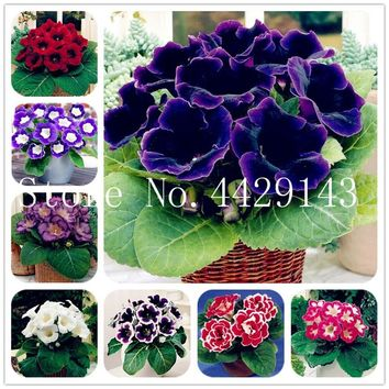 100 Pcs Gloxinia Sinningia Speciosa Indoor Bonsai Plants Mix Colors Perennial Beautiful Flower for Diy Home Garden Supplies