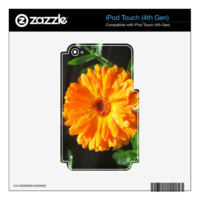 Sunny Calendula Raindrops Decal For iPod Touch 4G