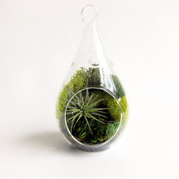 Forest Teardrop Small Terrarium with Air Plant // by groundlings