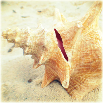 Seashell Photography. Shabby Coastal Cottage Chic. Tangerine and Pink Conch by beachbumchix