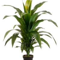 "Tropical Dracaena Artificial Potted Floor Plant - 44"" Tall"